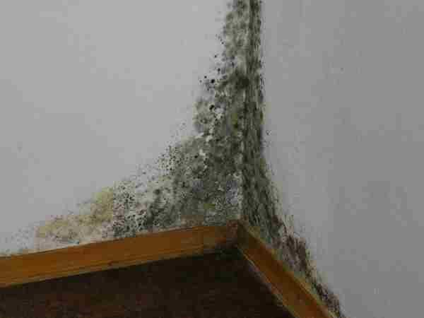 Грунтовка против плесени и грибка - как уберечь дом от вредных веществ