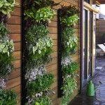 Вертикальное озеленение участка: особенности применения